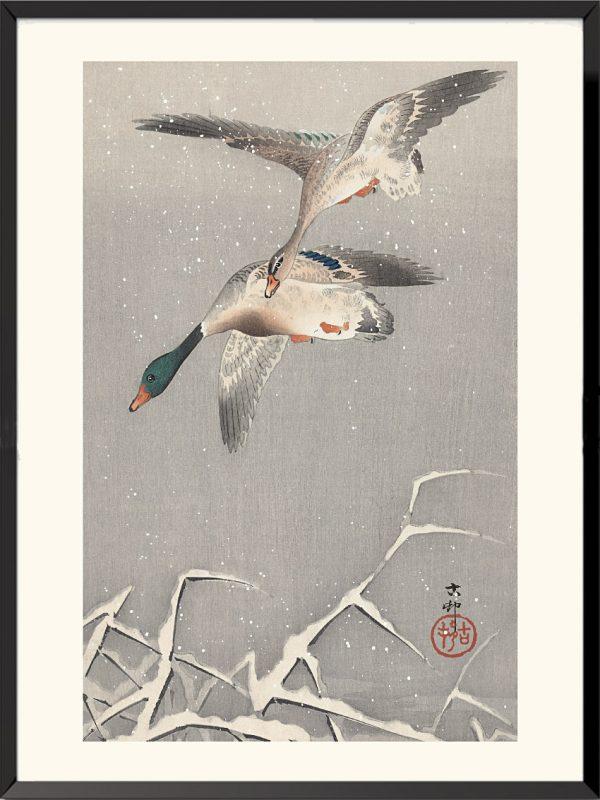 Estampe Canards colverts de Ohara Koson
