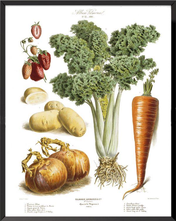 Illustration Les Plantes Potagères Planche n° 32 - 1876, Album Vilmorin