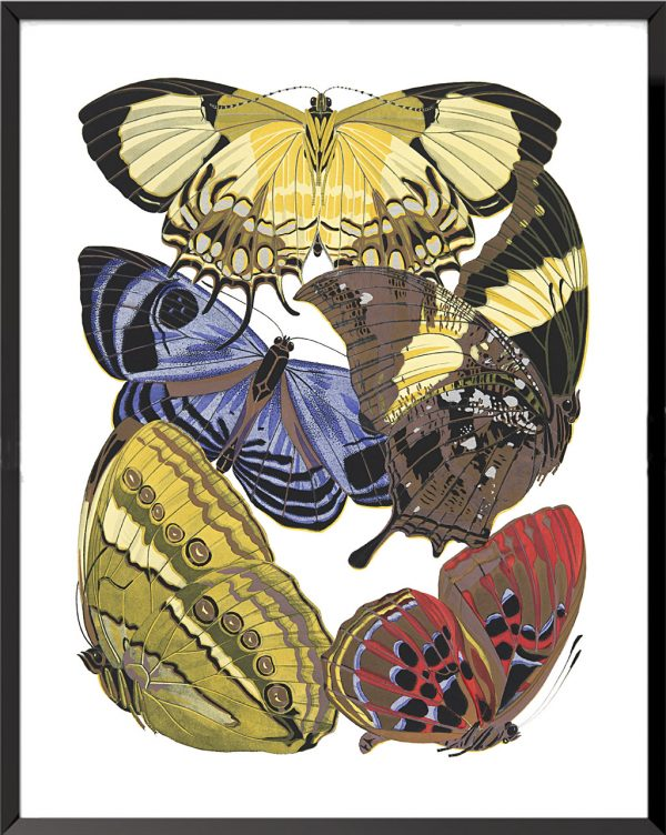 Illustration Papillons (planche 1) de Émile Séguy