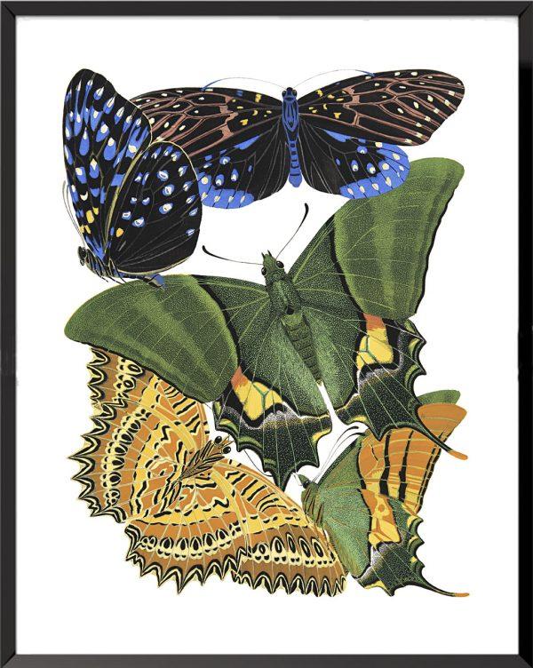 Illustration Papillons (planche 2) de Émile Allain Séguy