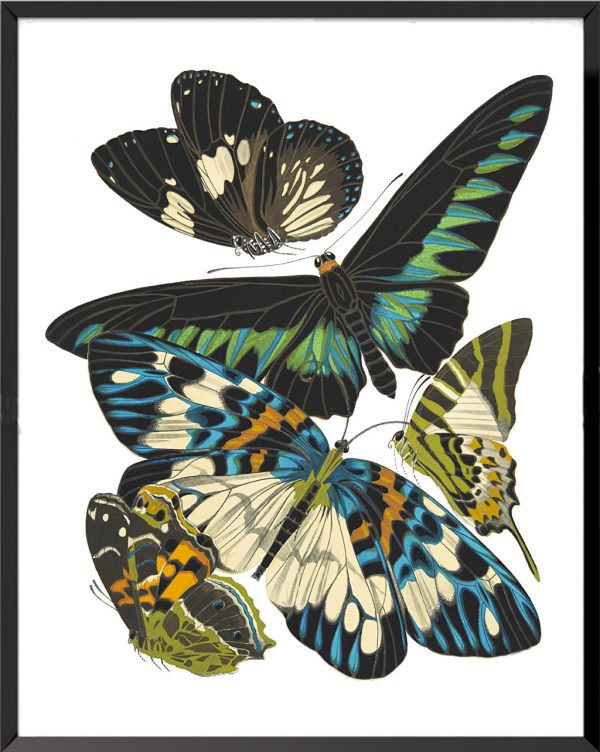 Illustration Papillons (planche 3) de Émile Allain Séguy