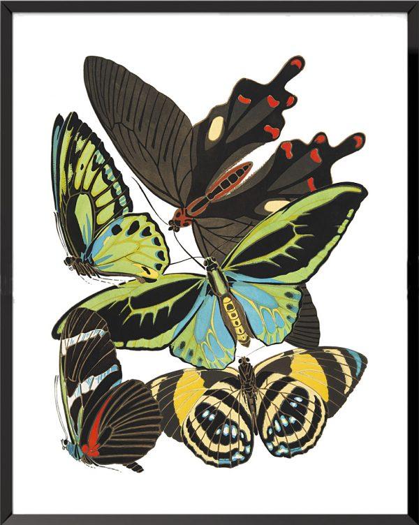 Illustration Papillons (planche 4) de Émile Allain Séguy