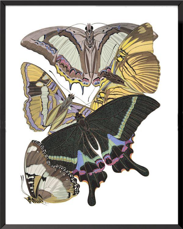 Illustration Papillons (planche 5) de Émile Allain Séguy