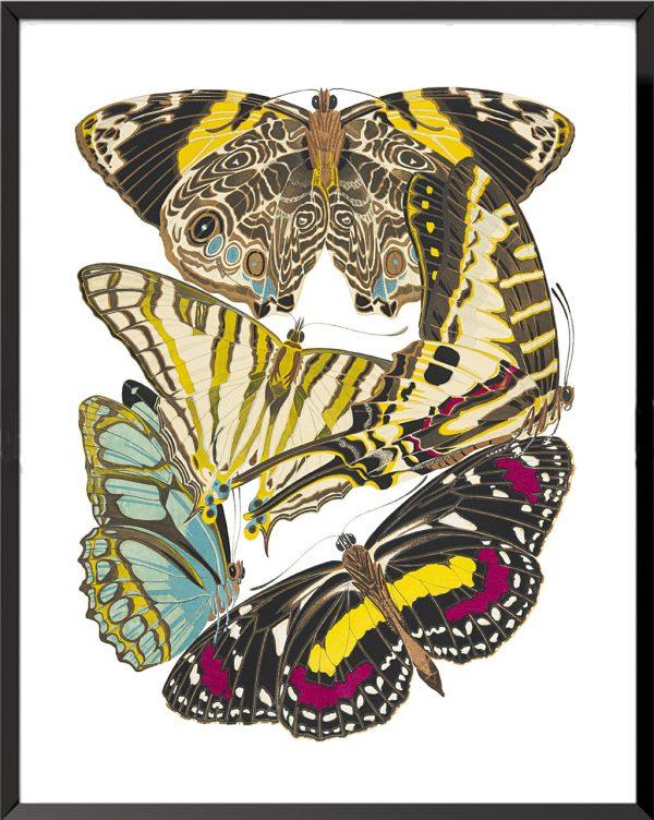 Illustration Papillons (planche 6) de Émile Allain Séguy